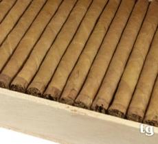 Porfina Wilde Cigarillos Sumatra 50 er Holzkiste